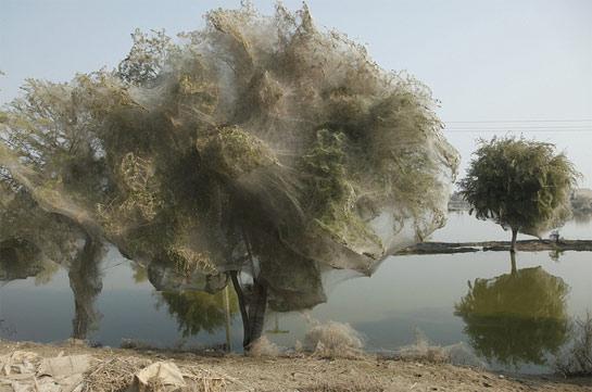 SpiderwebTrees.jpg