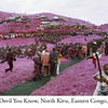 RichardMosse07.jpg
