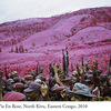 RichardMosse08.jpg
